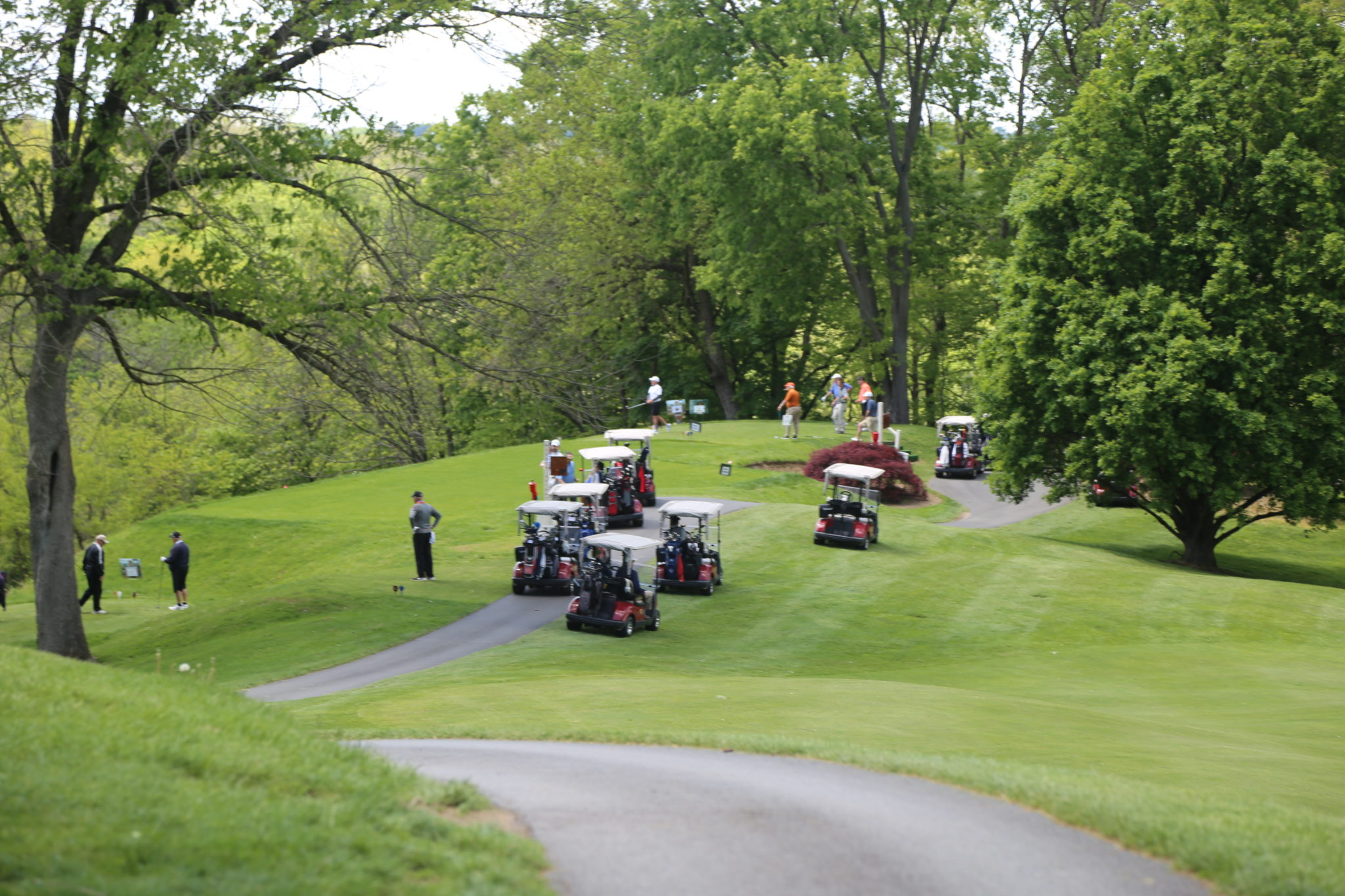view of golf course with golf carts