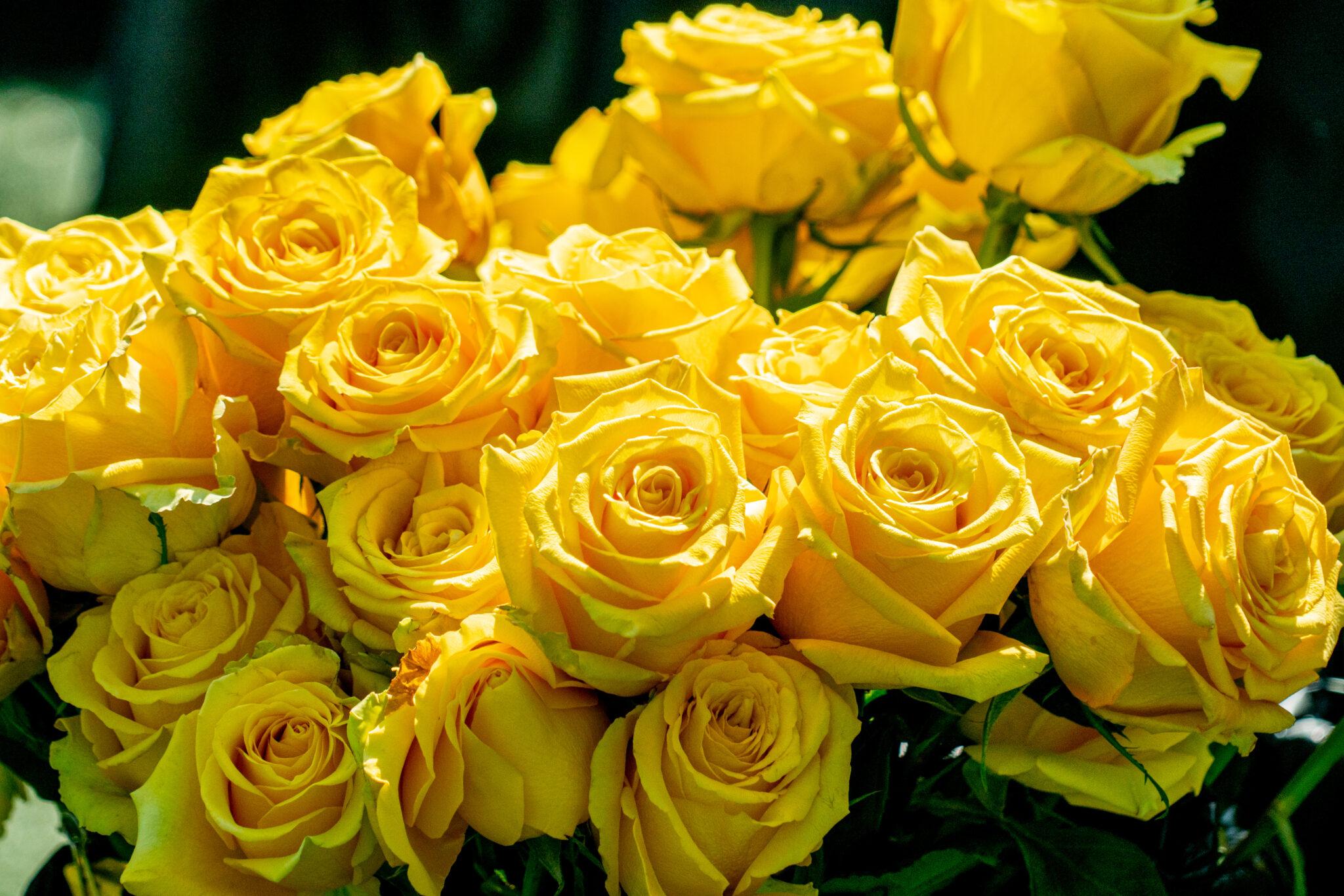 yellow roses for graduates