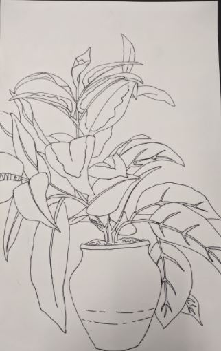 sketch of potted plant